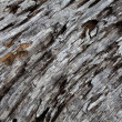 Weathering Tree Trunk — Stock Photo