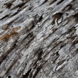 Weathering Tree Trunk - Stock Photo