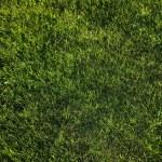 Lawn — Stock Photo #9374710