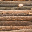 Wood Log — Foto Stock