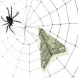 Spider Web and dollar — Stock Photo #9650959