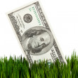 Dollar and Green Grass - Stock Photo