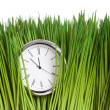 Clock and green grass — Stock Photo