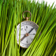 Stock Photo: Compass and Green Grass