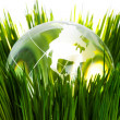 Globe and green grass — Stock Photo #9651408
