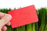 ビジネス カードと緑の芝生 — ストック写真