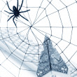 Spider Web and dollar — Stock Photo #9662525