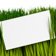 Business Card and green grass — Stok fotoğraf