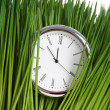 Clock and green grass — Stock fotografie
