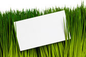 Carte de visite et l'herbe verte — Photo