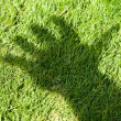 Green Grass and hand shadow - Stock Photo