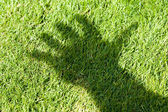 Green Grass and hand shadow — Stock Photo