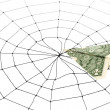 Spider Web and dollar — Stock Photo