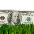 Dollar and Green Grass — Stock Photo