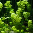 Stock Photo: Aquarium Plant