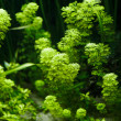Aquarium Plant — Stock Photo #9786797