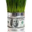 Green grass and dollar — ストック写真