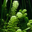 Aquarium Plant — Stock Photo