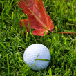 Golf Ball and Grass — Stock Photo #9938259