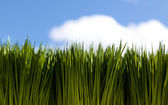 Green Grass and sky — Stock Photo
