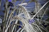 Ears of wheat in a field — Stock Photo