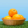 Oranges Basket in Grass - Stock Photo