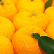 Citron — Stock Photo #8047648