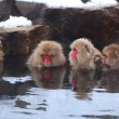 Stock Photo: Snow monkey