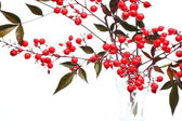 Nandina domestica — Stock Photo