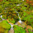 Green moss with water stream — Stock Photo