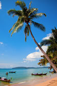 Palm tree in Thailand — Stock Photo