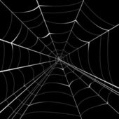 Spider vector background — Stock Vector