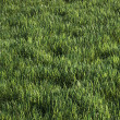 Green grass — Foto de stock #10262590