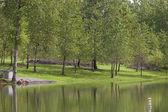Park and lake. — Stock Photo