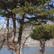 Celilo park and old pine trees, Columbia river Oregon state. - Stock Photo