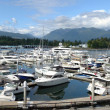 Royalty-Free Stock Photo: Luxury yachts in a marina near Stanley park, Vancouver BC.