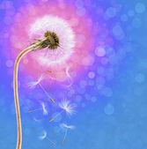 Dandelion on the long stem at sunrise — Stock Photo