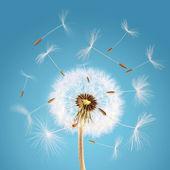 風と共に飛んでタンポポの種子 — ストック写真