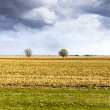 Stock Photo: AmericCountry with stormy sky