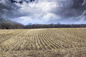 Field with stormy sky and fog at dusk — Stock Photo