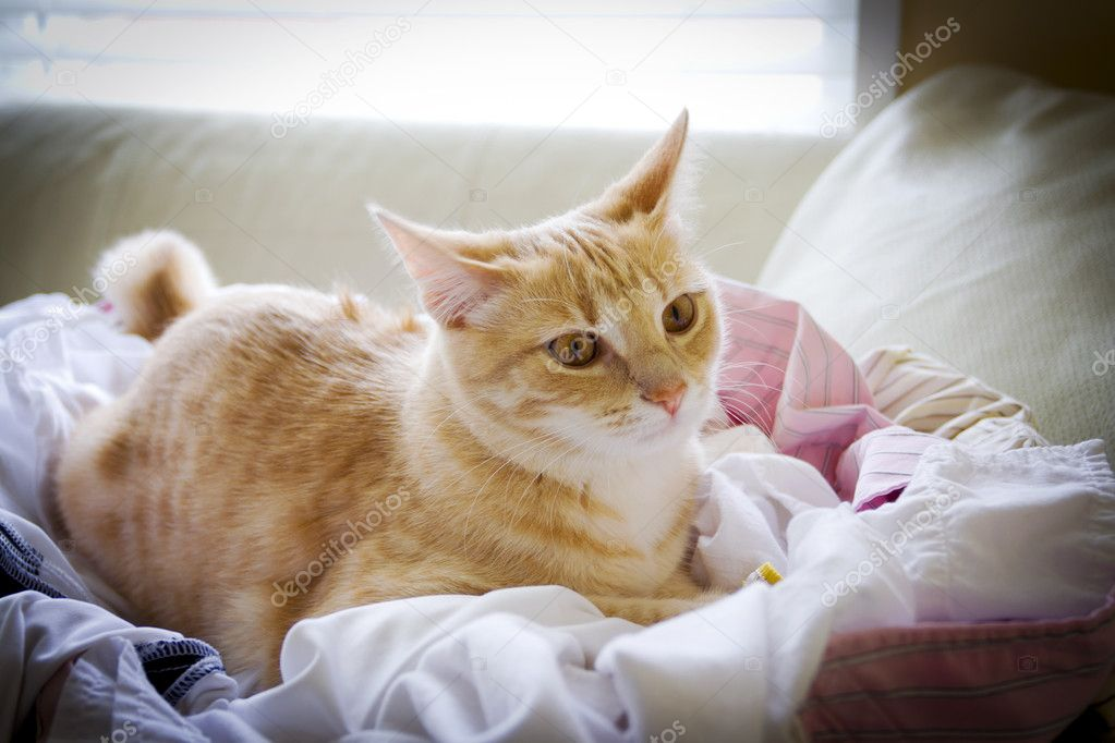 what causes gallbladder inflammation in cats
