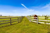 Horse on american country — Stock Photo