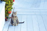 Cat in Key West — Stock Photo