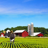 Mad Cows Milk Farm — Stock Photo