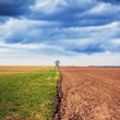 Farmland with stormy sky — Stock Photo