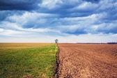 Jordbruksmark med stormig himmel — Stockfoto