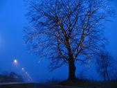 Illuminated tree — Stock Photo
