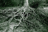 Roots all over — Foto Stock