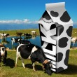 Cows grazing - Milk packaging - Stock Photo