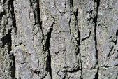 """oak bark"" — Foto de Stock"